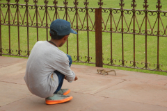 Agra Fort - Nandan is playing with a Squirrel