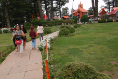 Shimla Jakhoo Temple - Ample greenery in the temple complex