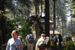 Manali - Hadimba temple seen through Devdar trees