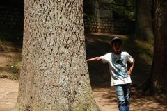 Manali - Nandan is leaning onto a Devdar tree